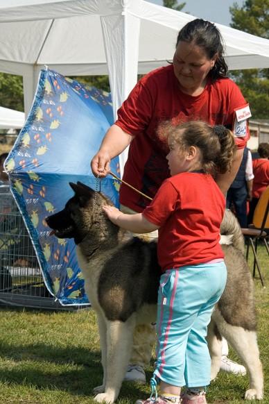 Országos Őrző-védő CAC Kutyakiállítás Fotó: Szalai György / Jászberény Online