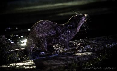Állatkertek éjszakája 2014 - Jászberény / Jászberény Online / Gémesi Balázs